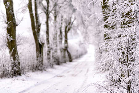 snowy alley in Masuria in eastern Poland in Winter