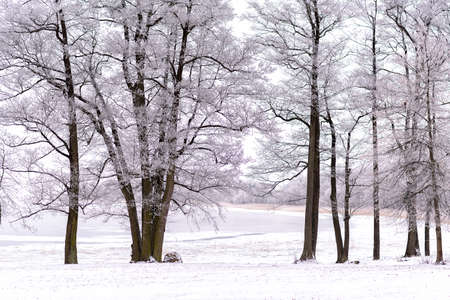 snowy landscape in winter in Masuria in eastern Poland Banco de Imagens - 117204144