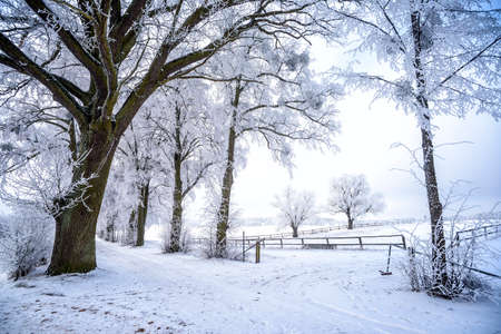 snowy landscape in winter in Masuria in eastern Poland Banco de Imagens - 117204165