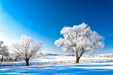 snowy landscape in winter in Masuria in eastern Poland Banco de Imagens - 117203644