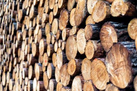 Holzstücke nach dem Schneiden im Wald Standard-Bild