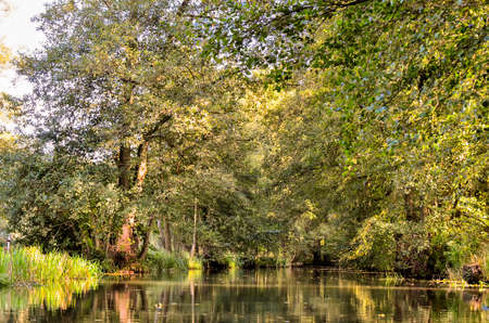landscape with rivers and forest in the Spreewald in Brandenburg in Germany Stok Fotoğraf
