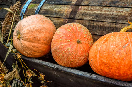 pumpkins on a market in Spreewald, Germany, in autumn Stock Photo