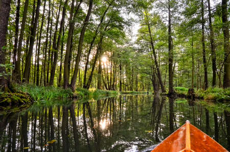 landscape with rivers and forest in the Spreewald in Brandenburg in Germany Фото со стока