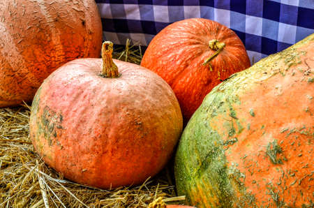 pumpkins on a market in Spreewald, Germany, in autumn Imagens