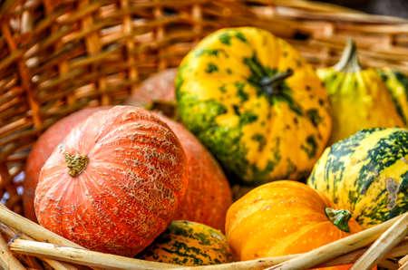pumpkins on a market in Spreewald, Germany, in autumn Фото со стока