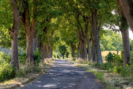aliado en verano en Masuria en el este de Polonia