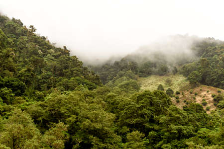 cloud forest in the mountains of Costa Rica in central america