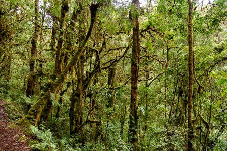 rainforest in Costa Rica, central america