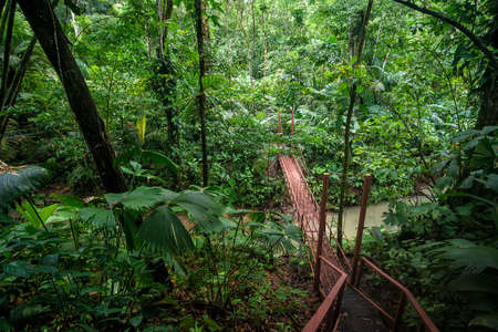 bridge in the jungle in central america 스톡 콘텐츠 - 138454430