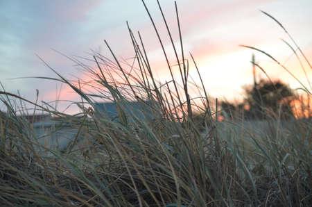 seen: colorful sunset seen grass