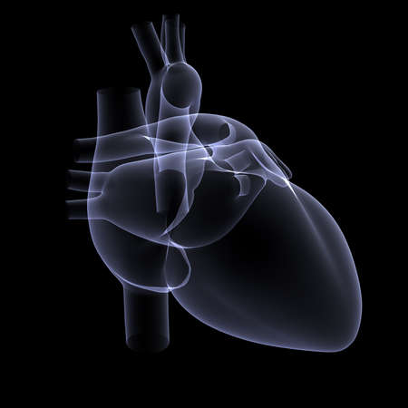 myocardium: X-ray of a Human heart - 3D rendered Stock Photo