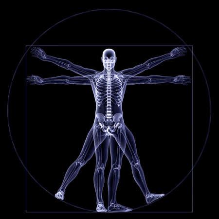 Skeleton X-Ray - Vitruve: X-Ray d'un squelette masculin dans un style Leonardo da Vinci Vitruve pose. Isolé sur un fond noir Banque d'images