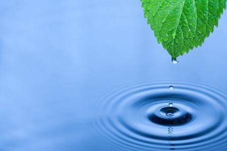 飛散水滴の付いた緑色の葉。