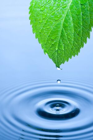 impact: Green leaf with splashing water drops. Stock Photo