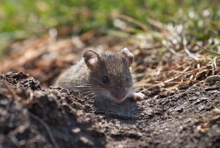 彼女のアジトから探してマウス