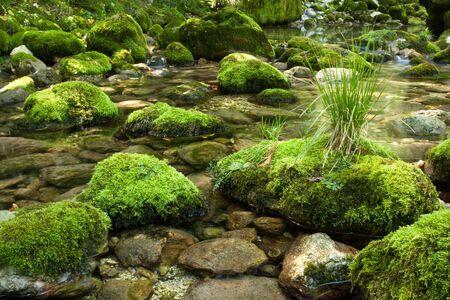 岩の苔で覆われて小さなストリーム