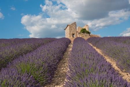 フランス、プロヴァンスの家遺跡とラベンダー畑