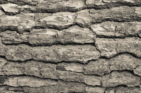 desaturated colors: Background of beige bark of tree texture