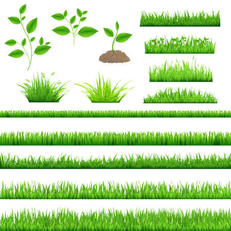 saplings: Green Grass, Isolated On White Background, Vector Illustration