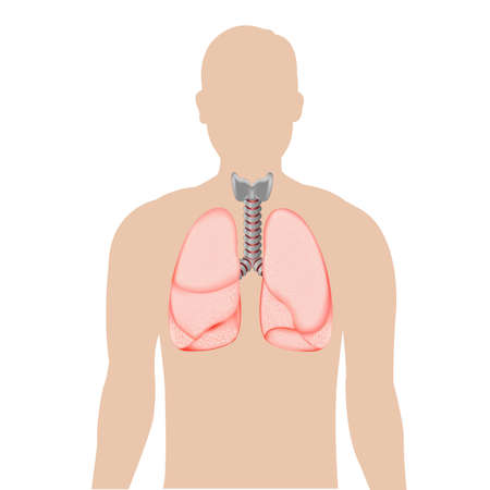 respire: Human Lungs, Isolated On White Background, Vector Illustration  Illustration