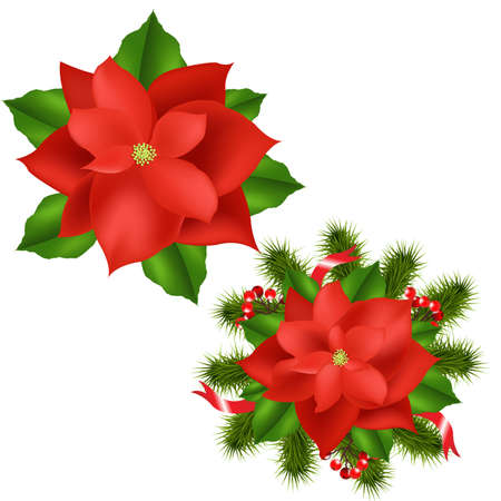 2 Poinsettia, Isolated On White Background, Vector Illustration Vector