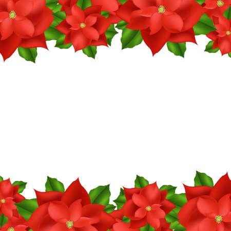 flor de pascua: 2 Red Fronteriza Flor de Pascua, aislado en fondo blanco, ilustraci�n vectorial