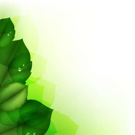 Green Leaf, Vector Illustration Stock Vector - 11814464