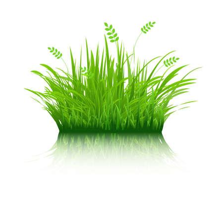 regentropfen: Eco Gras, auf wei�em Hintergrund, Vektor-Illustration