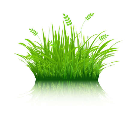 Eco Grass, Isolated On White Background, Vector Illustration
