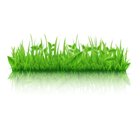 Green Grass With Leafs, Isolated On White Background, Vector Illustration  Vector