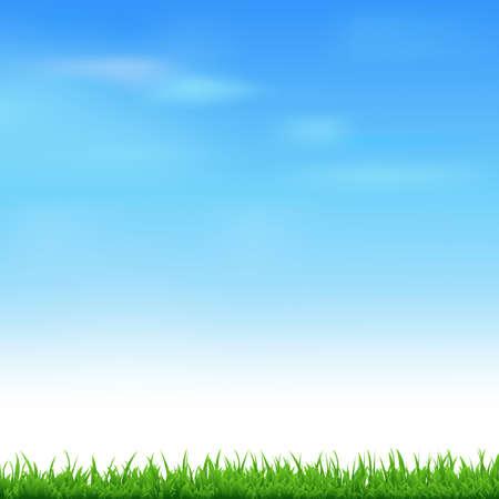 grass illustration: Landscape With Grass, Vector Illustration