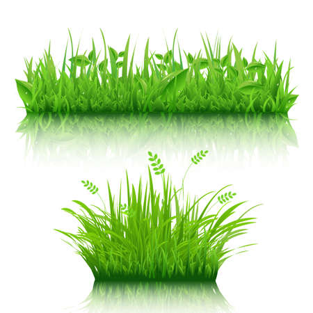 2 Grass Border, Isolated On White Background, Vector Illustration