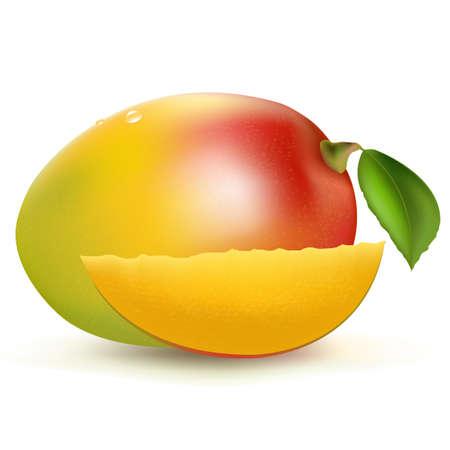 mango fruta: Mango, aislados en fondo blanco, ilustraci�n vectorial