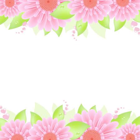 gerbera daisy: Gerber rosa, aislados en fondo blanco, ilustraci�n vectorial Vectores