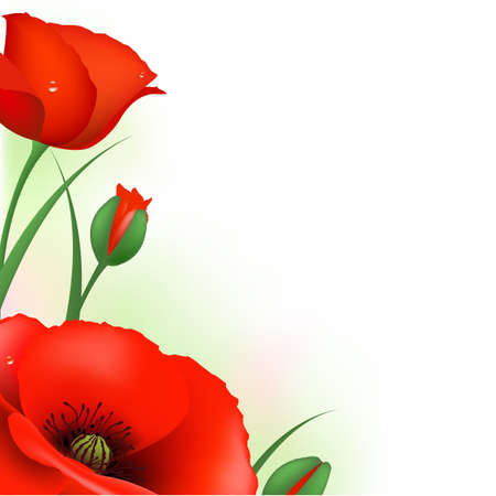poppy leaf: Spring Card With Red Poppies, Vector Illustration
