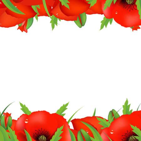 Red Poppy Border, Vector Illustration