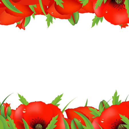 Red Poppy Border, Vector Illustration