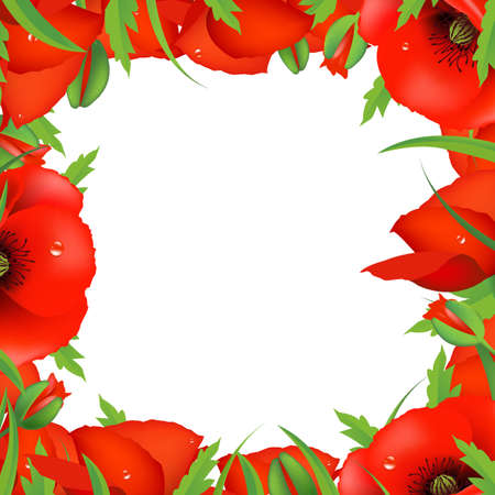 poppy field: Red Poppy Frame, Vector Illustration