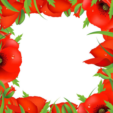 Red Poppy Frame, Illustration Vector