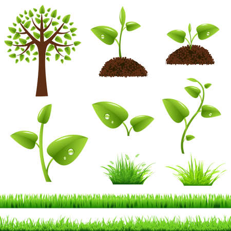 green herbs: Green Grass And Leafs Set, Illustration   Illustration
