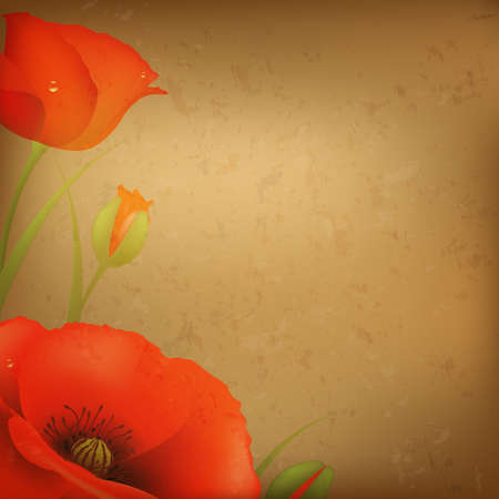 Vintage Red Poppy, Illustration  Vector