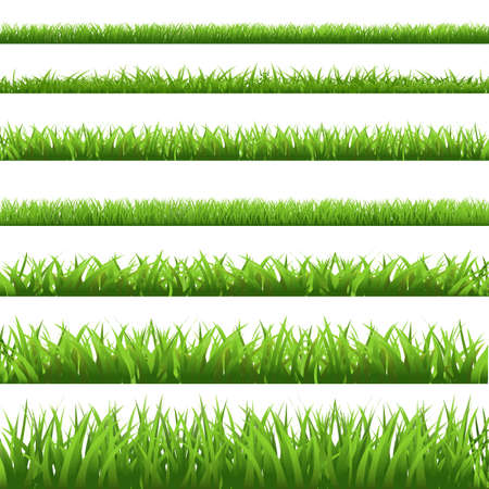 Green Grass Set, Isolated On White Background, Vector Illustration  Vector