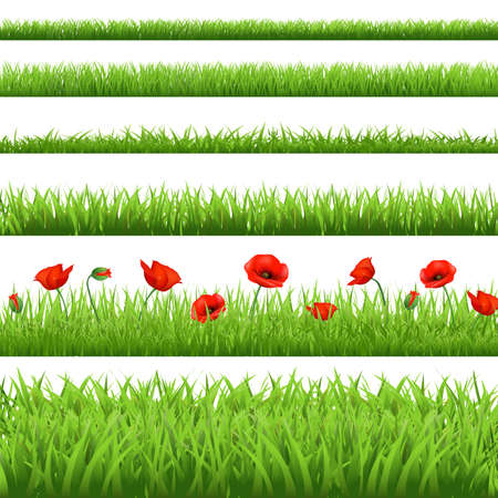 Green Grass Set With Red Poppy, Isolated On White Background, Vector Illustration