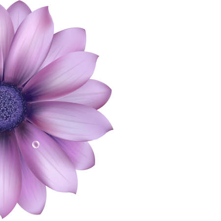 closeup of pink daisy with: Lilac Flower, Isolated On White Background, Vector Illustration