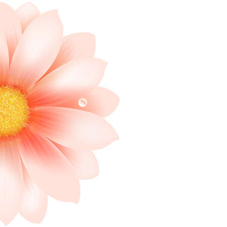 gerber flowers: Pink Flower, Isolated On White Background, Vector Illustration