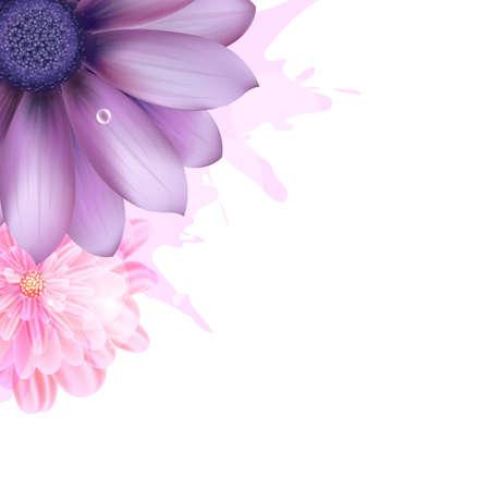 gerbera daisy: Lila y rosa Gerber, Fondo Vector