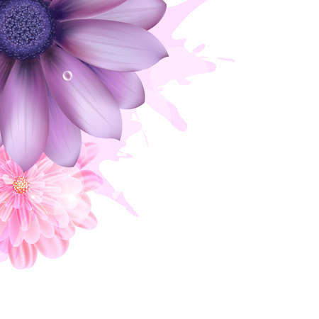 Lilac And Pink Gerbers, Vector Background Vector