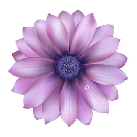 daisy flower: Lilac Flower With Water Drop, Vector Background