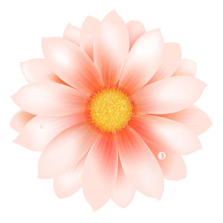 gerber: Pink Flower With Water Drop, Vector Background